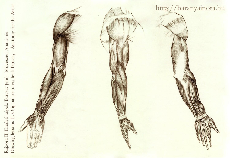 Lujo Anatomía Para El Artista Por Barcsay Jeno Regalo - Anatomía de ...